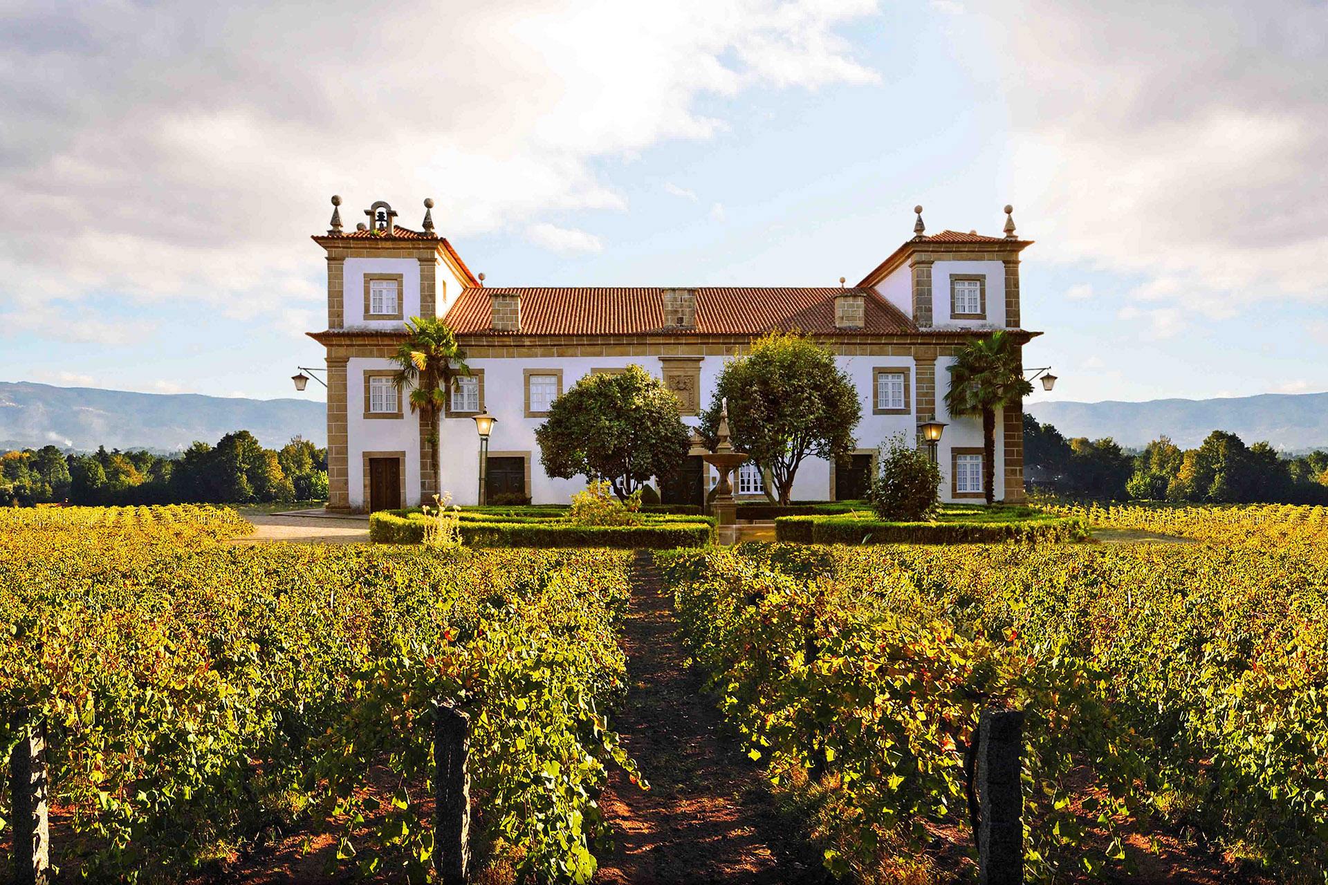 Виноградник в регионе Виньош Вердеш