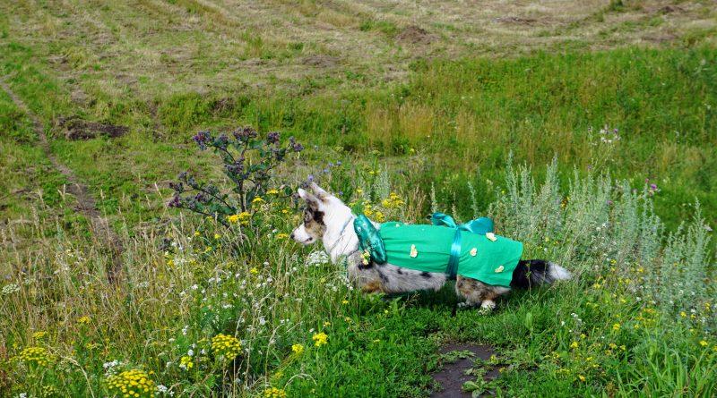 Итоги 2019 года: собака в нелепом костюме и репейник